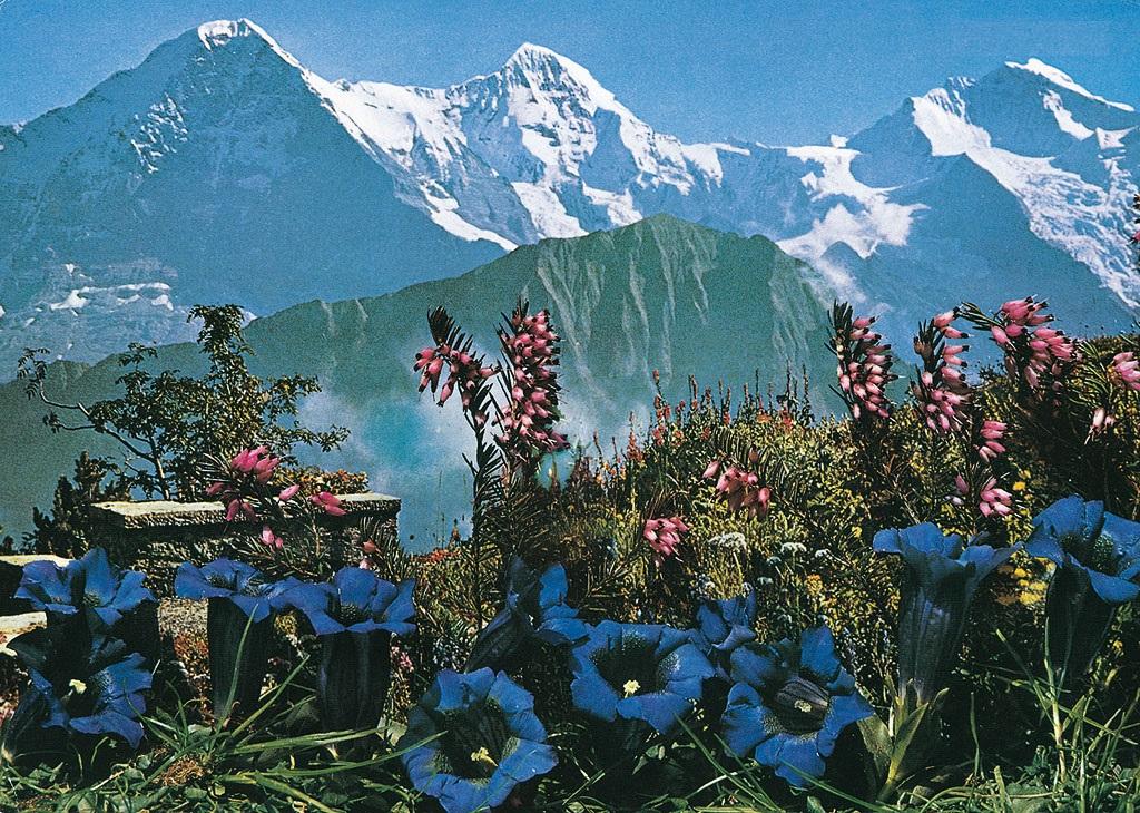 Schynige Platte Alpine Garden